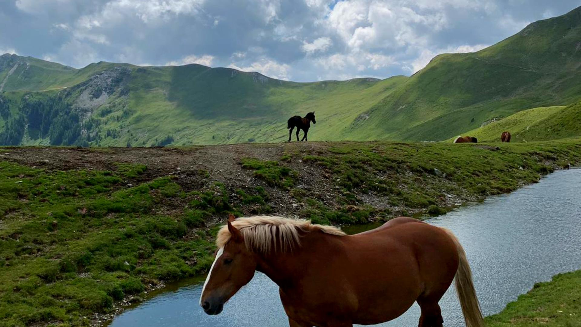 Hobuseid, lehmi, lambaid kohtab matkaradadel tervitamas